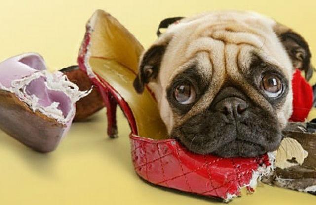 Hộp giày nhựa Mica/ABS Enito bảo vệ giày khỏi thú cưng